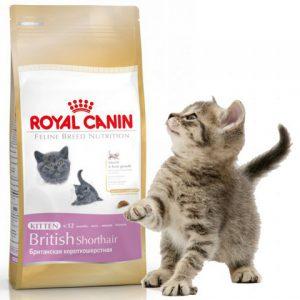 royal canin kitten british shorthair 10 kg britcat. Black Bedroom Furniture Sets. Home Design Ideas