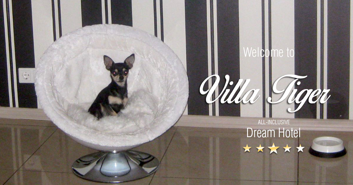 Villa-Tiger-Cat-Dog-Hotel-03